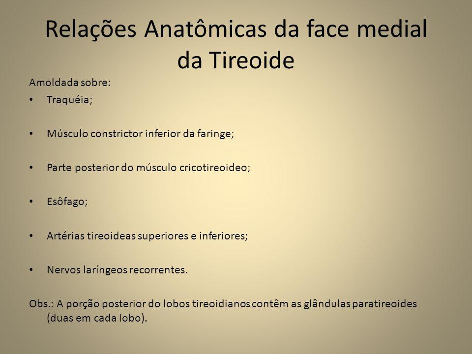 Relações Anatômicas da face medial da Tireoide Amoldada sobre: • Traquéia; • Músculo constrictor inferior da faringe; • Parte posterior do músculo cricotireoideo; • Esôfago; • Artérias tireoideas superiores e inferiores; • Nervos laríngeos recorrentes.