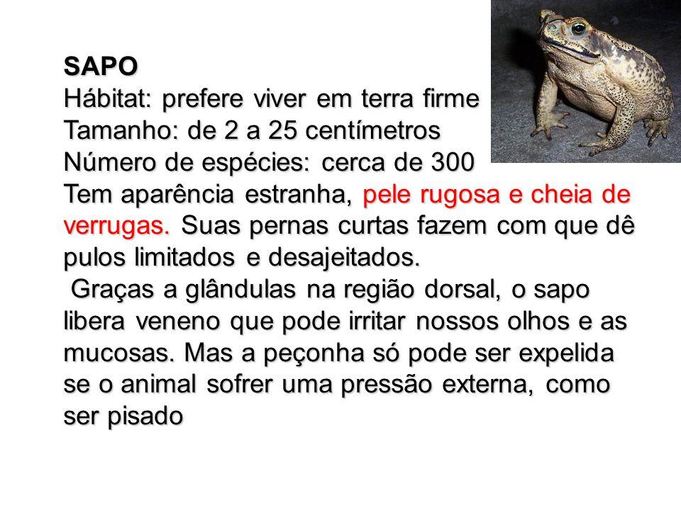 SAPO Hábitat: prefere viver em terra firme Tamanho: de 2 a 25 centímetros Número de espécies: cerca de 300 Tem aparência estranha, pele rugosa e cheia de verrugas.