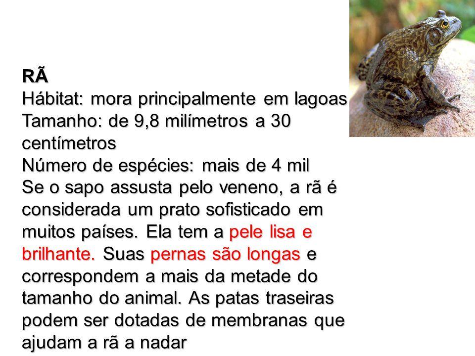 RÃ Hábitat: mora principalmente em lagoas Tamanho: de 9,8 milímetros a 30 centímetros Número de espécies: mais de 4 mil Se o sapo assusta pelo veneno,