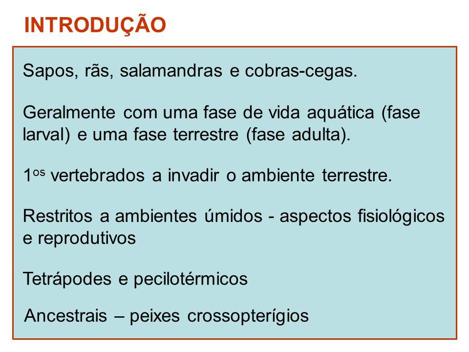 INTRODUÇÃO Sapos, rãs, salamandras e cobras-cegas. Geralmente com uma fase de vida aquática (fase larval) e uma fase terrestre (fase adulta). 1 os ver