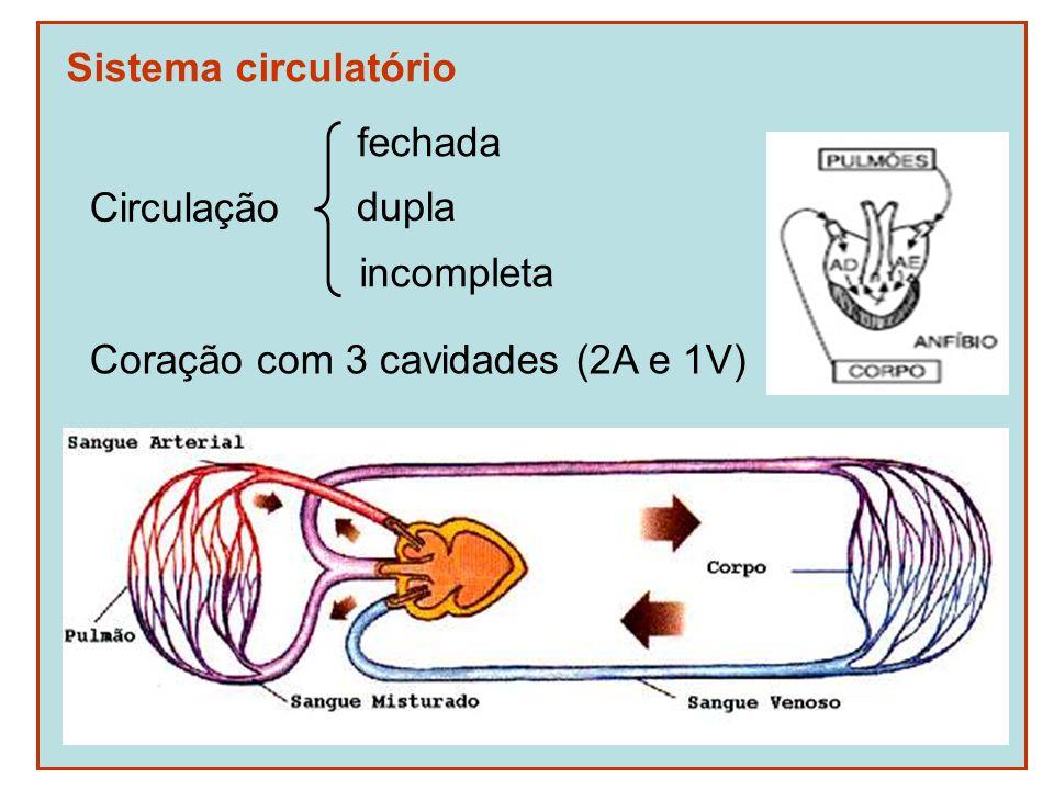 Sistema circulatório Circulação fechada dupla incompleta Coração com 3 cavidades (2A e 1V)