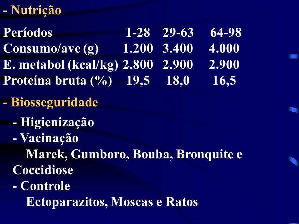 - Nutrição - Biosseguridade Períodos 1-28 29-63 64-98 Consumo/ave (g)1.200 3.400 4.000 E. metabol (kcal/kg)2.800 2.900 2.900 Proteína bruta (%) 19,5 1