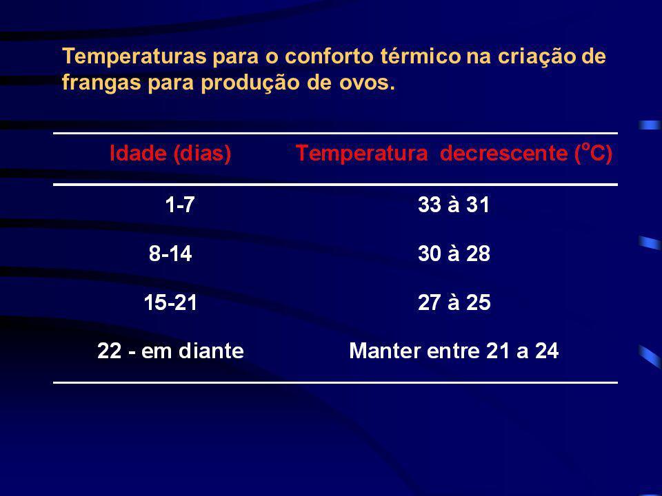 Temperaturas para o conforto térmico na criação de frangas para produção de ovos.