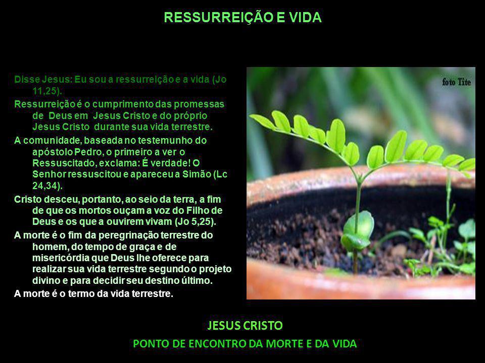 RESSURREIÇÃO E VIDA Disse Jesus: Eu sou a ressurreição e a vida (Jo 11,25).