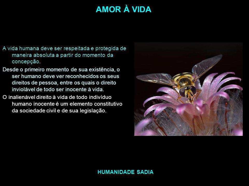 AMOR À VIDA A vida humana deve ser respeitada e protegida de maneira absoluta a partir do momento da concepção.