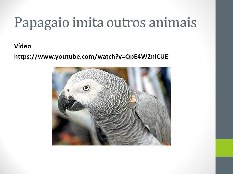 Papagaio imita outros animais Vídeo https://www.youtube.com/watch?v=QpE4W2niCUE