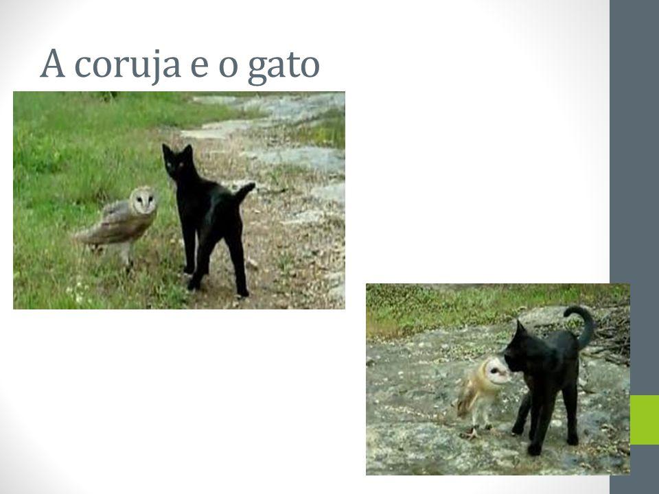 A coruja e o gato