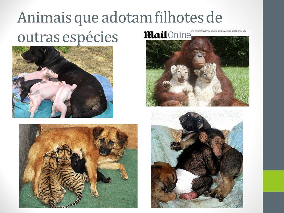 Animais que adotam filhotes de outras espécies