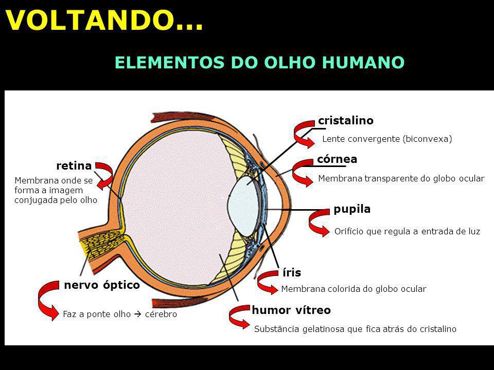 ÓPTICA DA VISÃO PARA AS MENINAS (...) (...) E OS CORINTHIANOS: O OLHO HUMANO E SUAS FUNÇÕES sobrancelha pálpebra superior pálpebra inferior cílios Par