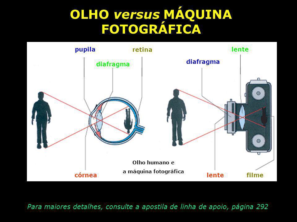 VOLTANDO... ELEMENTOS DO OLHO HUMANO córnea Membrana transparente do globo ocular pupila Orifício que regula a entrada de luz íris Membrana colorida d