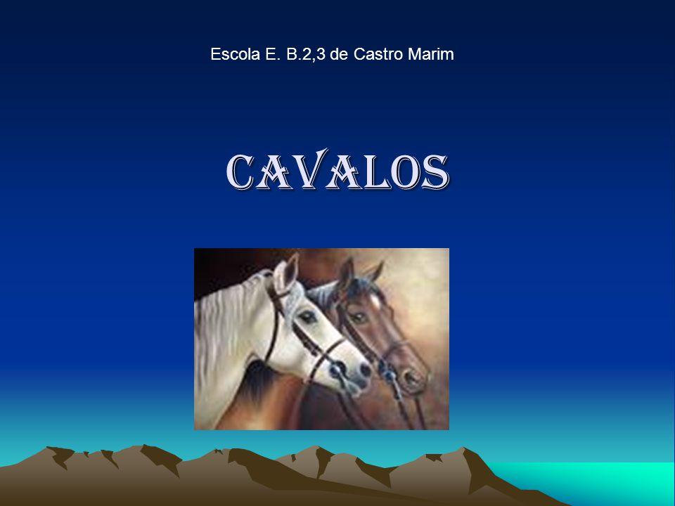 cavalos Escola E. B.2,3 de Castro Marim