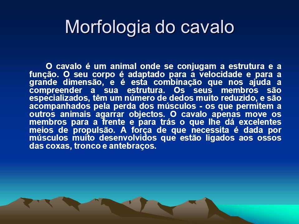 Morfologia do cavalo O cavalo é um animal onde se conjugam a estrutura e a função. O seu corpo é adaptado para a velocidade e para a grande dimensão,