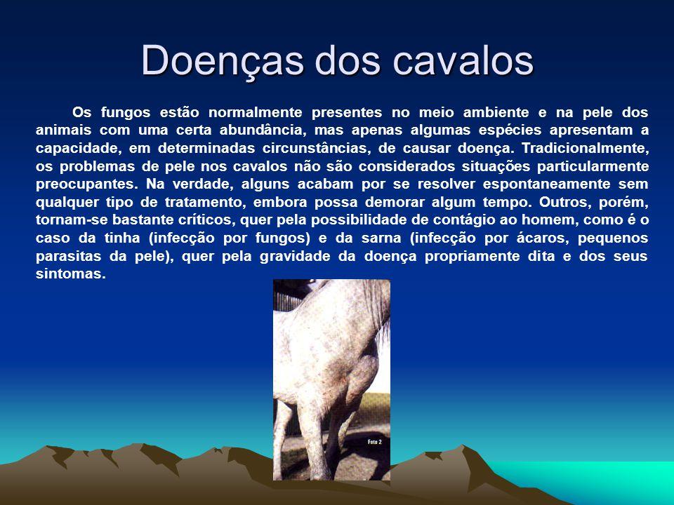 Doenças dos cavalos Os fungos estão normalmente presentes no meio ambiente e na pele dos animais com uma certa abundância, mas apenas algumas espécies