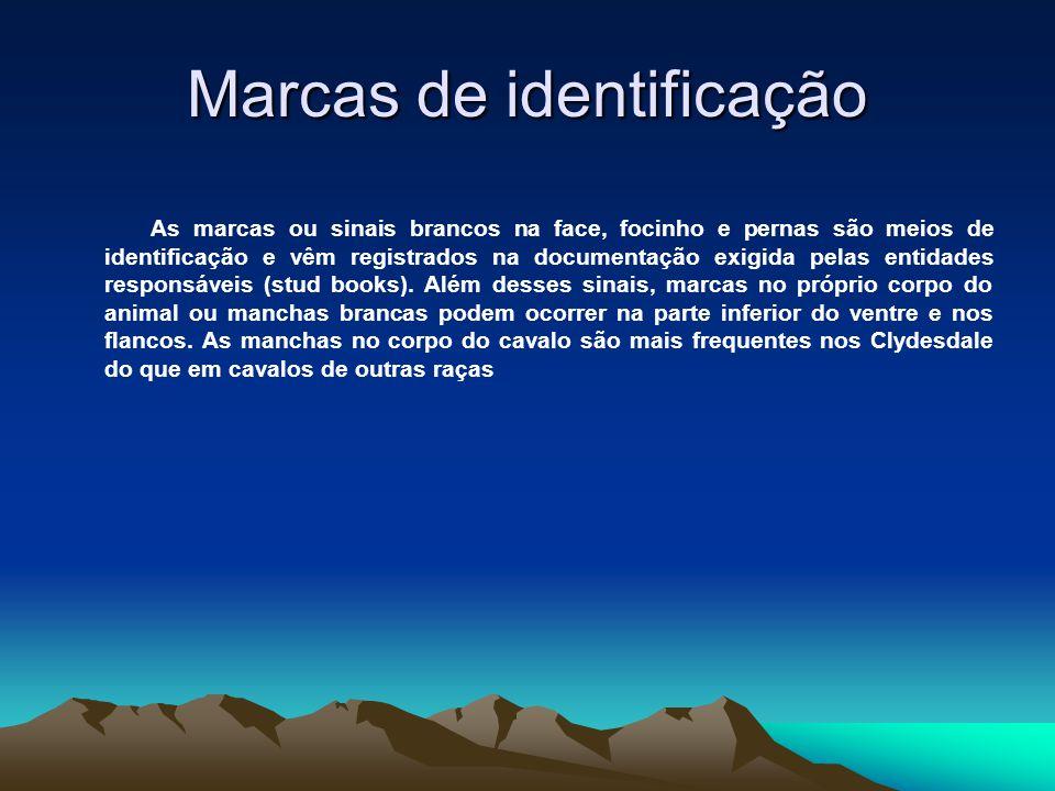 Marcas de identificação As marcas ou sinais brancos na face, focinho e pernas são meios de identificação e vêm registrados na documentação exigida pel