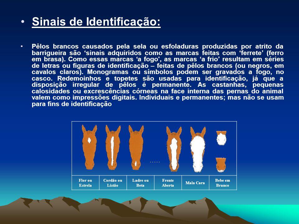 •Sinais de Identificação: •Pêlos brancos causados pela sela ou esfoladuras produzidas por atrito da barrigueira são 'sinais adquiridos como as marcas