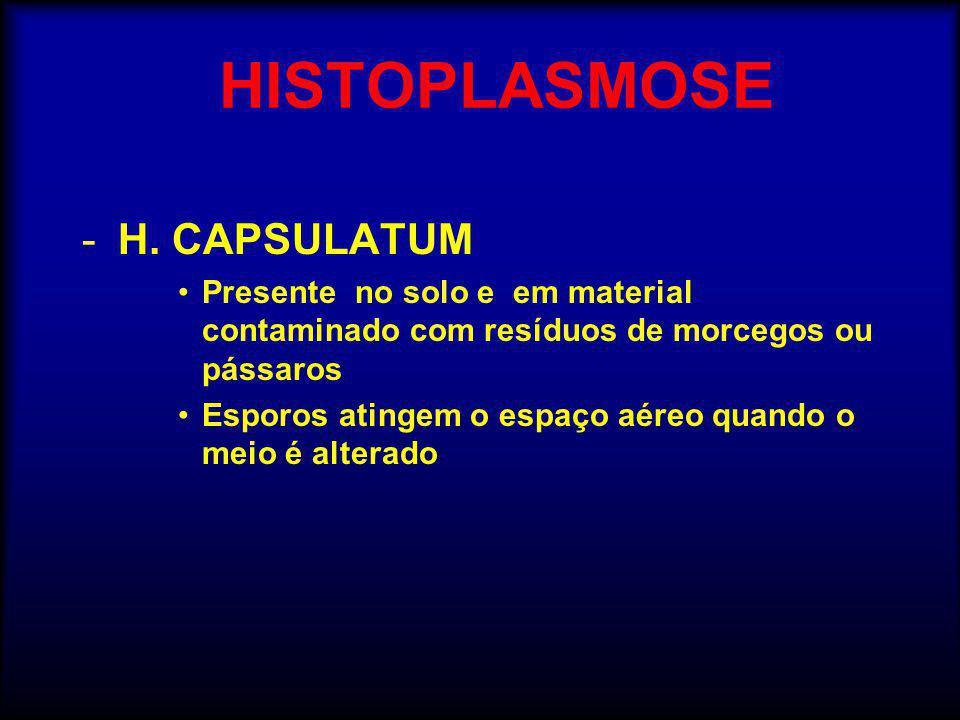 HISTOPLASMOSE -H. CAPSULATUM •Presente no solo e em material contaminado com resíduos de morcegos ou pássaros •Esporos atingem o espaço aéreo quando o
