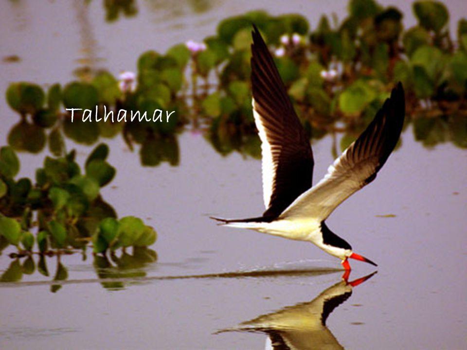 Talhamar