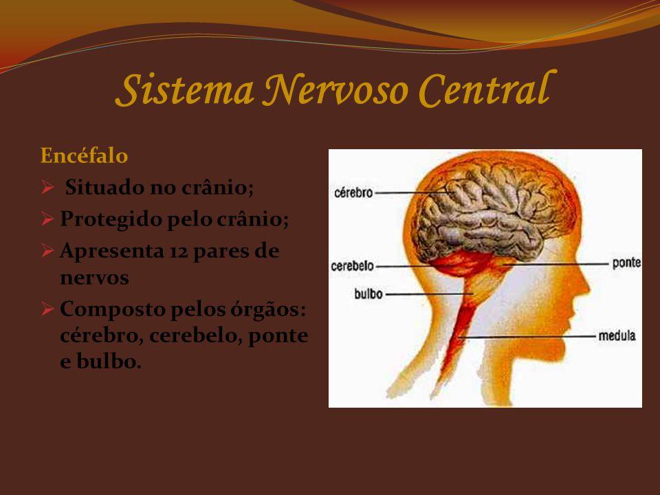 Células da Guia (neuroglia)  As células da neuroglia cumprem a função de sustentar, proteger, isolar e nutrir os neurônios. Sistema Nervoso