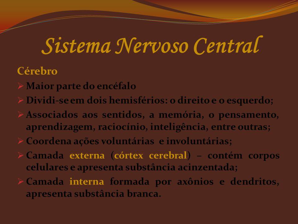 Sistema Nervoso Central Encéfalo  Situado no crânio;  Protegido pelo crânio;  Apresenta 12 pares de nervos  Composto pelos órgãos: cérebro, cerebe