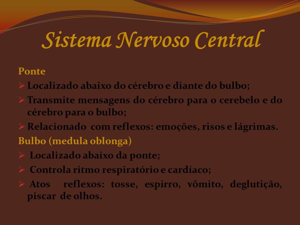 Cerebelo  Pequeno cérebro;  localizado abaixo do cérebro;  regula grau das contrações musculares em repouso;  mantém o equilíbrio do corpo. Observ
