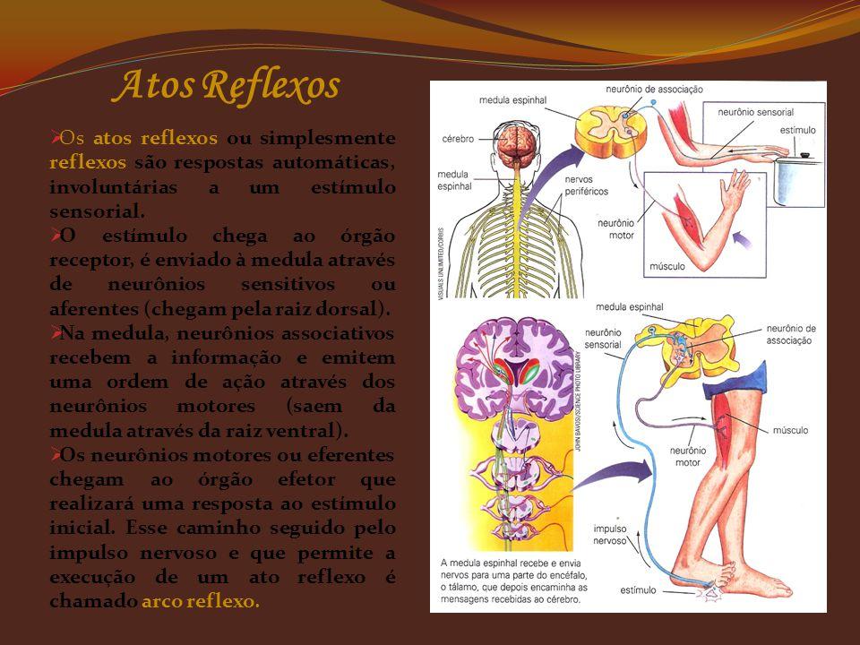 Sistema Nervoso Periférico Autônomo Simpático e Parassimpático