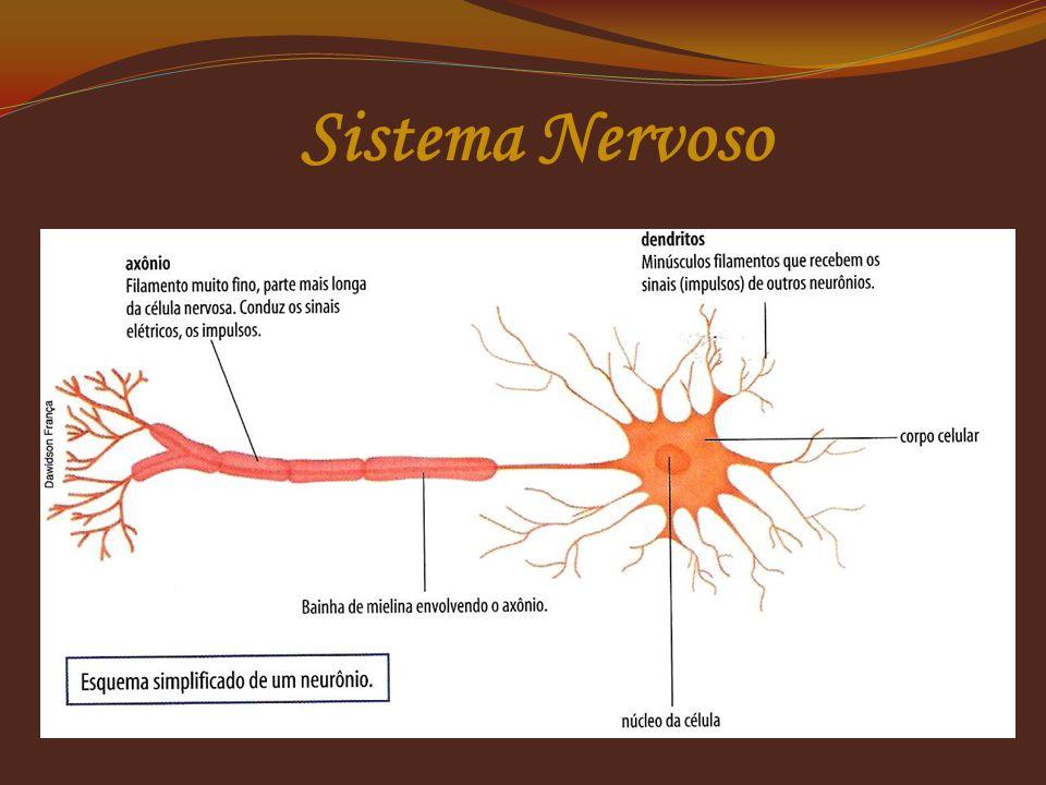 Neurônios  Transmite impulsos nervosos;  Apresenta corpo celular (contém núcleo);  Apresenta dois prolongamentos: dendrito e axônio.