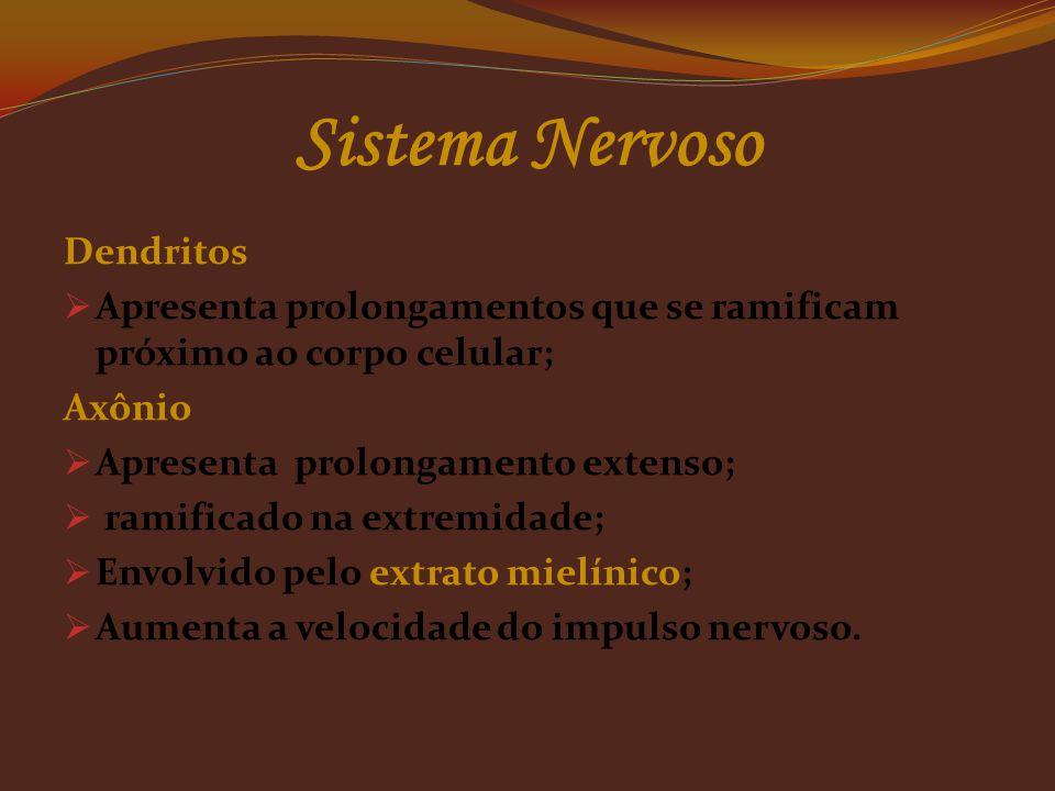 Dendritos  Apresenta prolongamentos que se ramificam próximo ao corpo celular; Axônio  Apresenta prolongamento extenso;  ramificado na extremidade;  Envolvido pelo extrato mielínico;  Aumenta a velocidade do impulso nervoso.