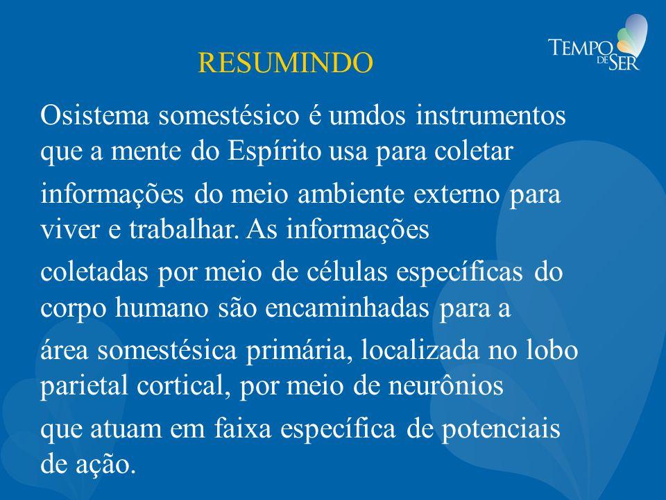 RESUMINDO Osistema somestésico é umdos instrumentos que a mente do Espírito usa para coletar informações do meio ambiente externo para viver e trabalh