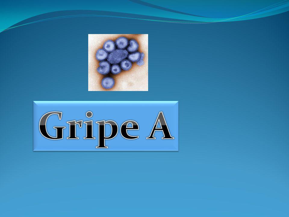  O novo vírus da Gripe A (H1N1), que apareceu recentemente, é um novo subtipo de vírus que afecta os seres humanos.