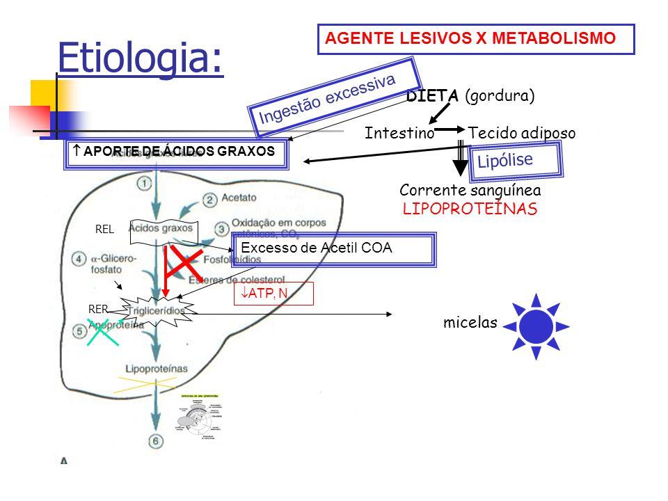 Etiopatogenia: a.Esteatose miocardíaca: Intoxicações, anemia aplástica, difteria, etc...