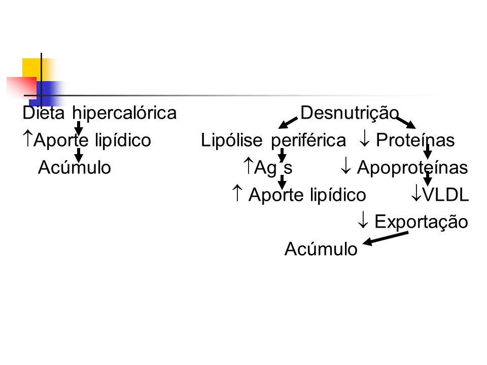 ETANOL NAD Álcool DH  NADH Aldeído acético + Acetil CoA  Glicerol Lesão microtubular Sintese de Ag's  Transporte lipoproteínas Acumulo de triglicérides Lesão mitocondrial  -Oxidação  Ag's