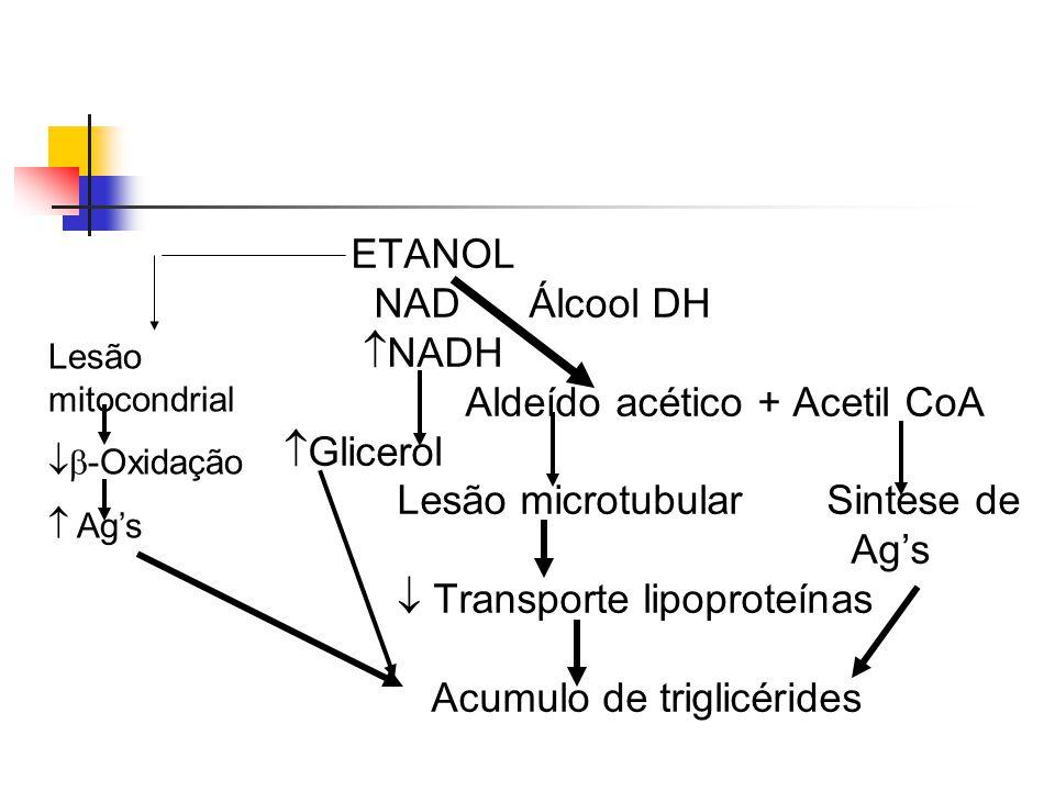 Características macroscópicas:  ocorre aumento do volume e diminuição da consistência (órgão fica mais pastoso), com friabilidade e amarelamento, além da presença de gorduras emulsionadas na faca ao corte.