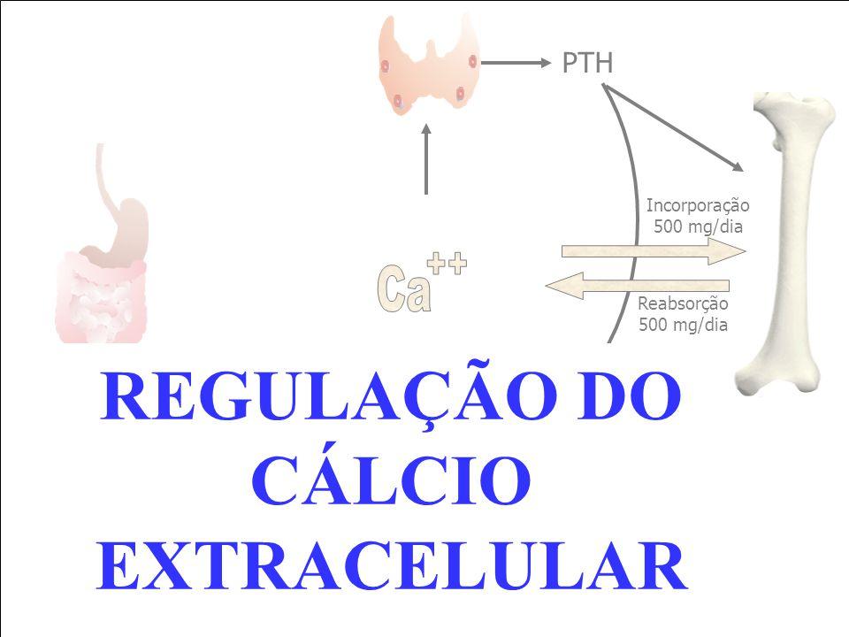PTH Reabsorção 500 mg/dia 1,25 (OH) 2 Vit D Incorporação 500 mg/dia REGULAÇÃO DO CÁLCIO EXTRACELULAR
