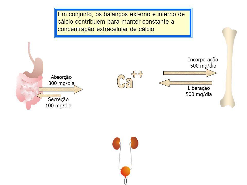 Em conjunto, os balanços externo e interno de cálcio contribuem para manter constante a concentração extracelular de cálcio Secreção 100 mg/dia Absorç