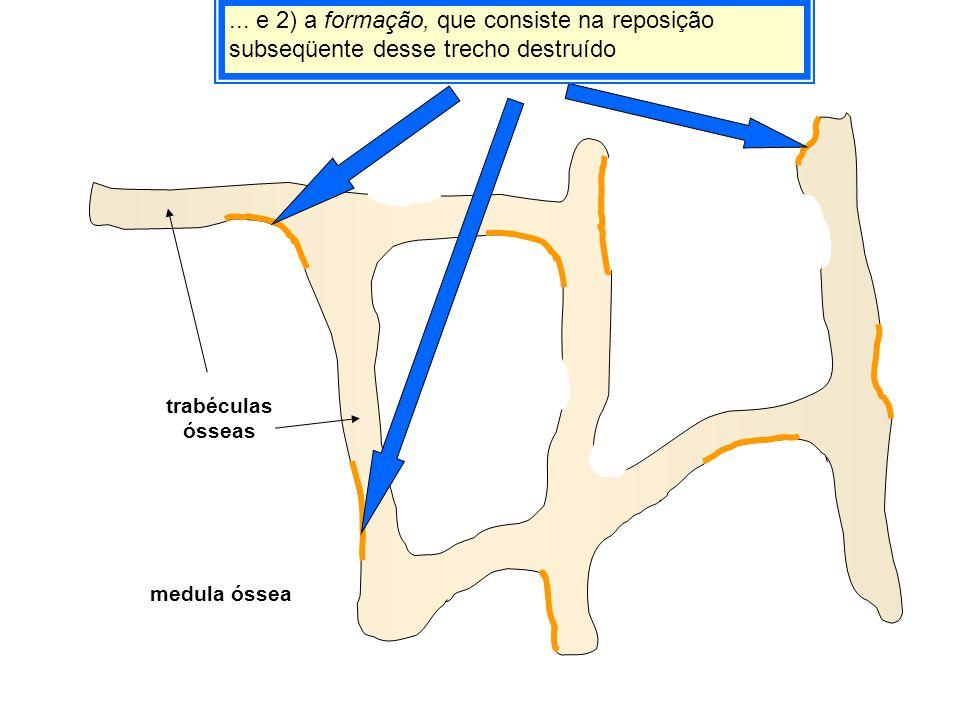 ... e 2) a formação, que consiste na reposição subseqüente desse trecho destruído medula óssea trabéculas ósseas