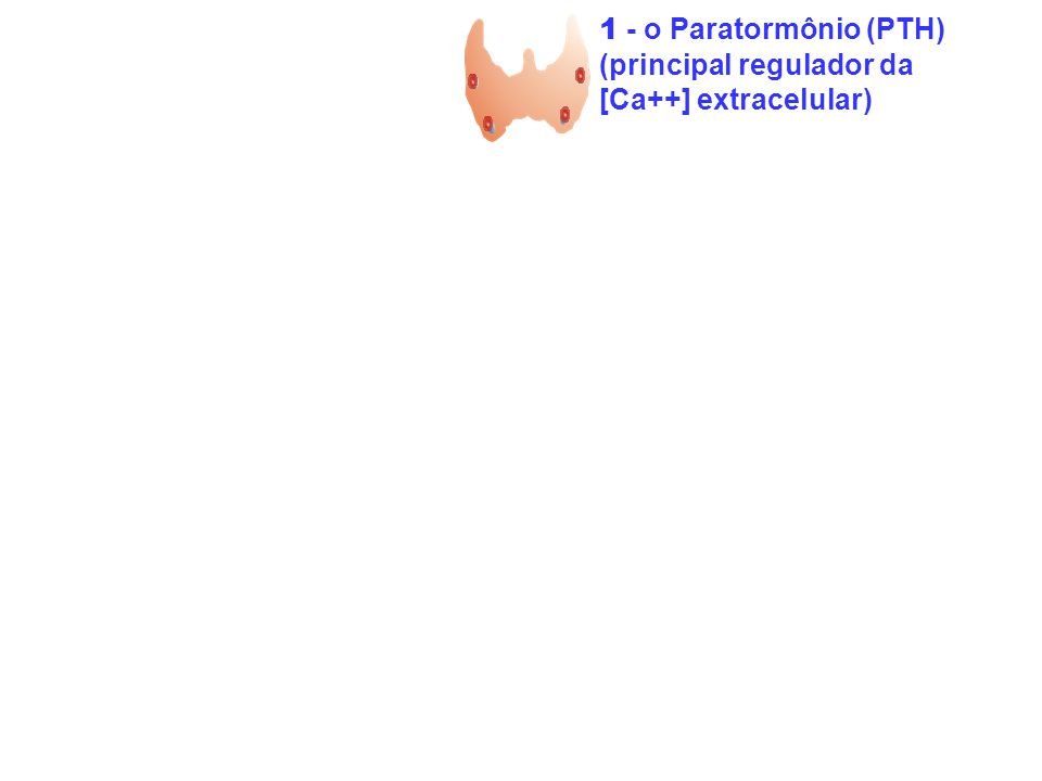 1 - o Paratormônio (PTH) 2 - a vitamina D [1,25(OH 2 D 3 ]