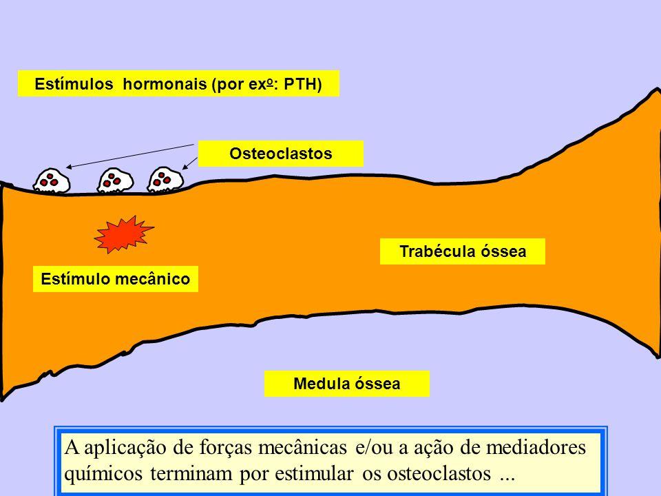 Medula óssea Trabécula óssea Estímulo mecânico Estímulos hormonais (por ex o : PTH) Osteoclastos A aplicação de forças mecânicas e/ou a ação de mediad