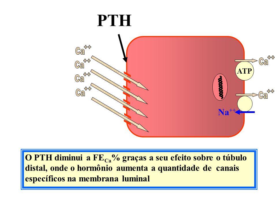 O PTH diminui a FE Ca % graças a seu efeito sobre o túbulo distal, onde o hormônio aumenta a quantidade de canais específicos na membrana luminal Filt