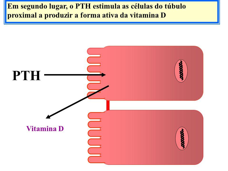 Em segundo lugar, o PTH estimula as células do túbulo proximal a produzir a forma ativa da vitamina D PTH Vitamina D