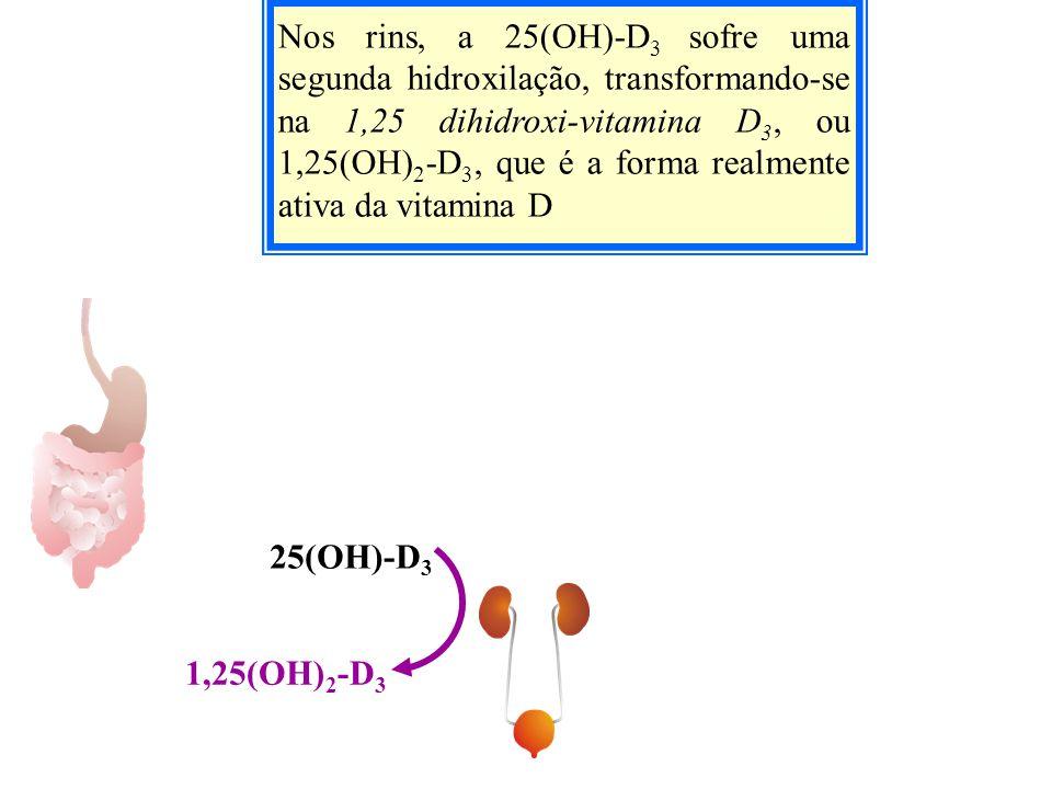 Nos rins, a 25(OH)-D 3 sofre uma segunda hidroxilação, transformando-se na 1,25 dihidroxi-vitamina D 3, ou 1,25(OH) 2 -D 3, que é a forma realmente at