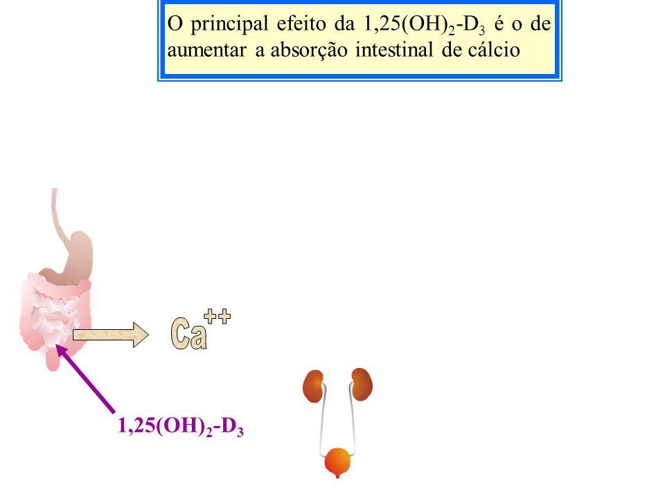 O principal efeito da 1,25(OH) 2 -D 3 é o de aumentar a absorção intestinal de cálcio 1,25(OH) 2 -D 3