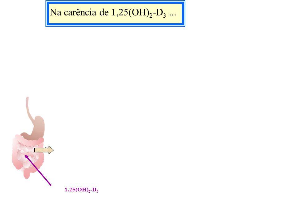 Na carência de 1,25(OH) 2 -D 3... 1,25(OH) 2 -D 3