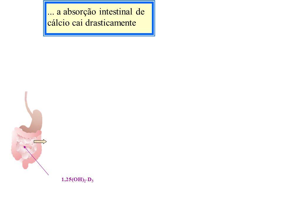 ... a absorção intestinal de cálcio cai drasticamente 1,25(OH) 2 -D 3