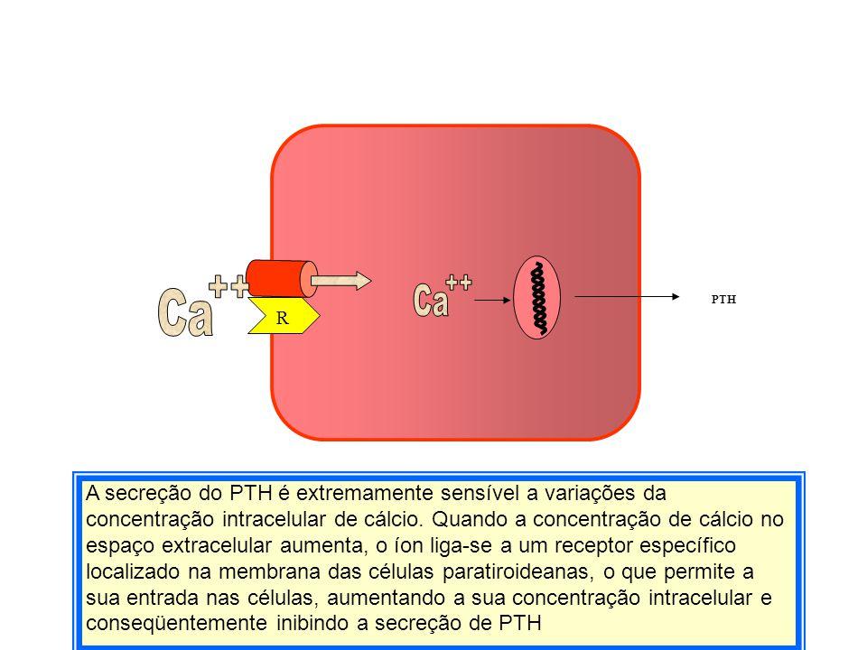 Em conjunto, os balanços externo e interno de cálcio contribuem para manter constante a concentração extracelular de cálcio Secreção 100 mg/dia Absorção 300 mg/dia Liberação 500 mg/dia Incorporação 500 mg/dia