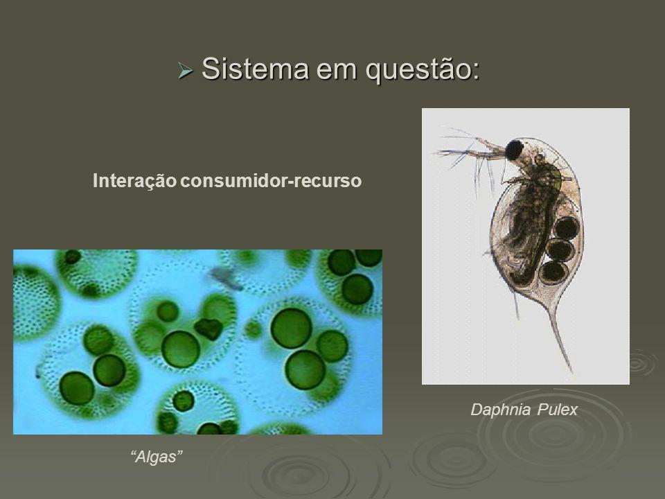 """ Sistema em questão: Daphnia Pulex """"Algas"""" Interação consumidor-recurso"""