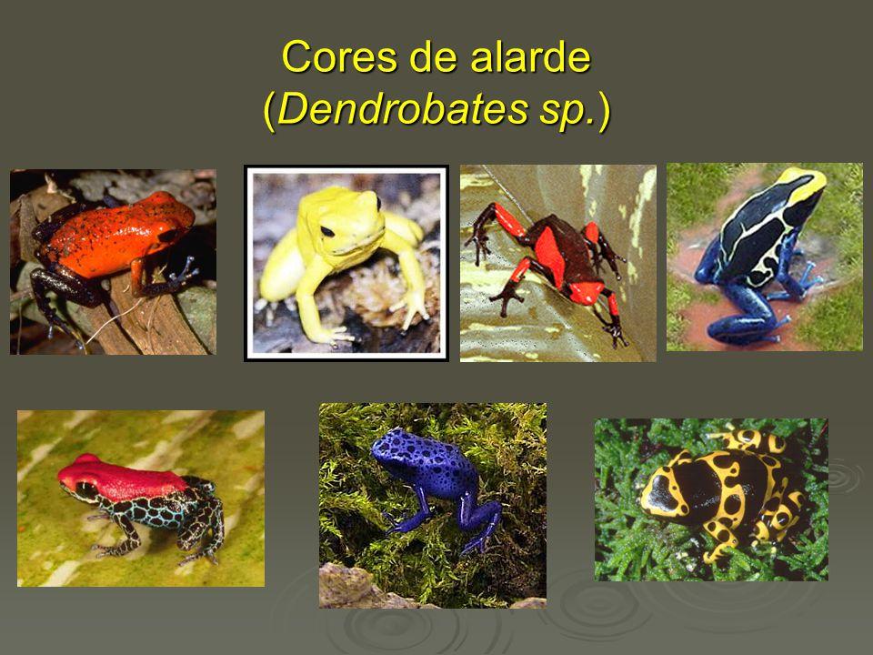 Mimetismo (demonstra o poder da seleção): Mulleriano: duas espécies ( perigosas ) mimetizam os mesmos padrões de coloração.