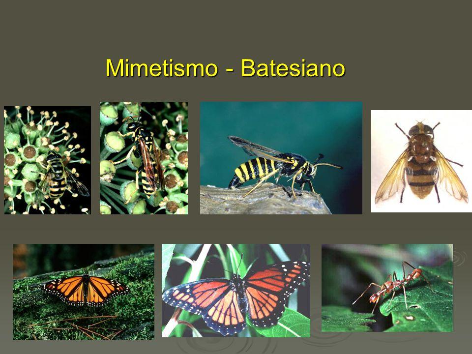 Mimetismo - Batesiano