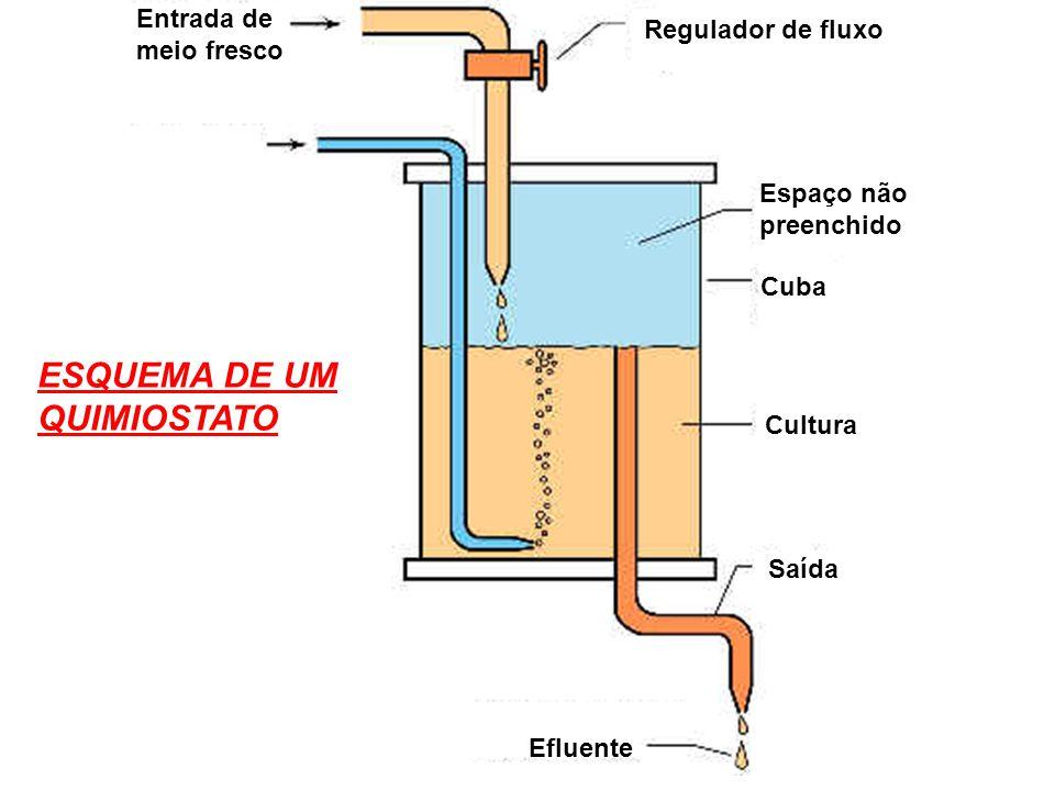 Entrada de meio fresco Regulador de fluxo Espaço não preenchido Cuba Cultura Saída Efluente ESQUEMA DE UM QUIMIOSTATO
