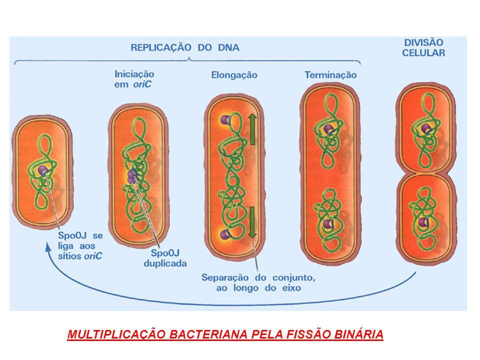 MULTIPLICAÇÃO BACTERIANA PELA FISSÃO BINÁRIA