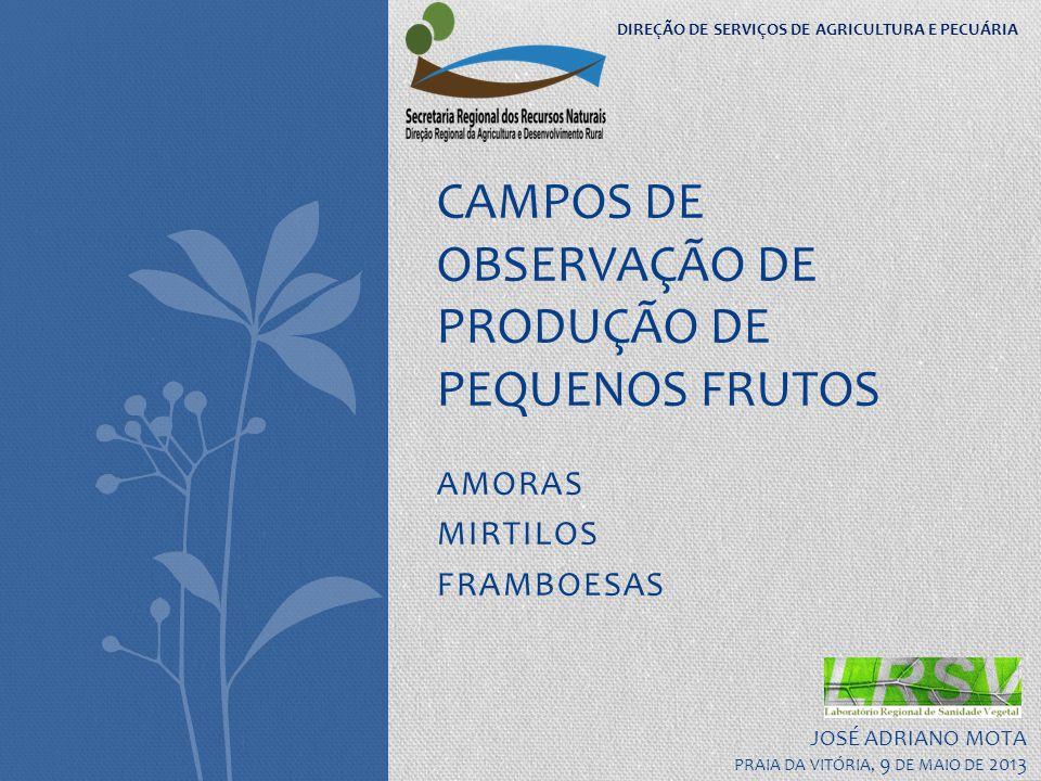 AMORAS MIRTILOS FRAMBOESAS CAMPOS DE OBSERVAÇÃO DE PRODUÇÃO DE PEQUENOS FRUTOS JOSÉ ADRIANO MOTA PRAIA DA VITÓRIA, 9 DE MAIO DE 2013 DIREÇÃO DE SERVIÇ